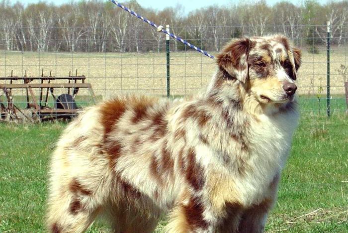 Aprender a manejar a un perro territorial