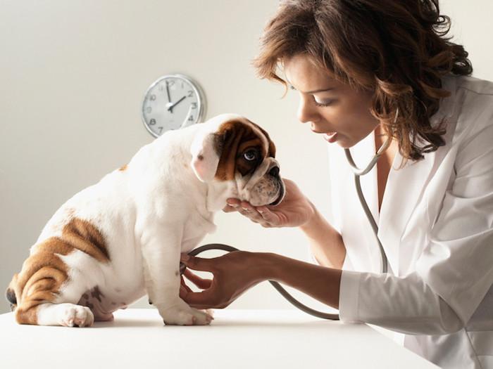 Por qué los cachorros son vulnerables a los gusanos