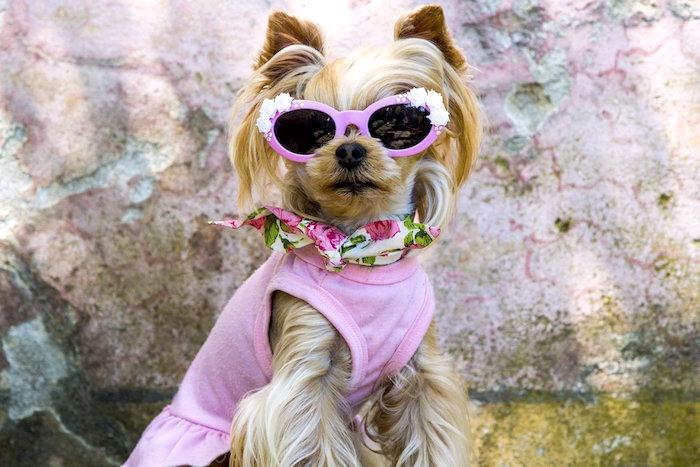 Cincuenta cosas que todo perro debe hacer antes de morir