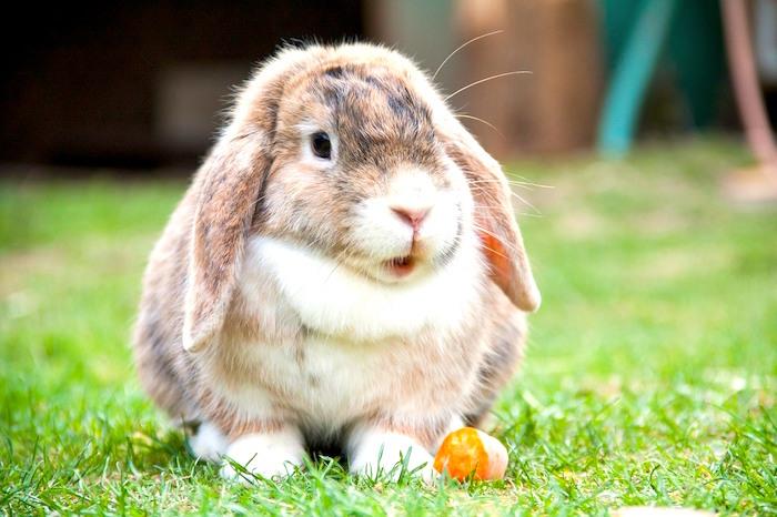 Los fundamentos de cuidar a tu conejo