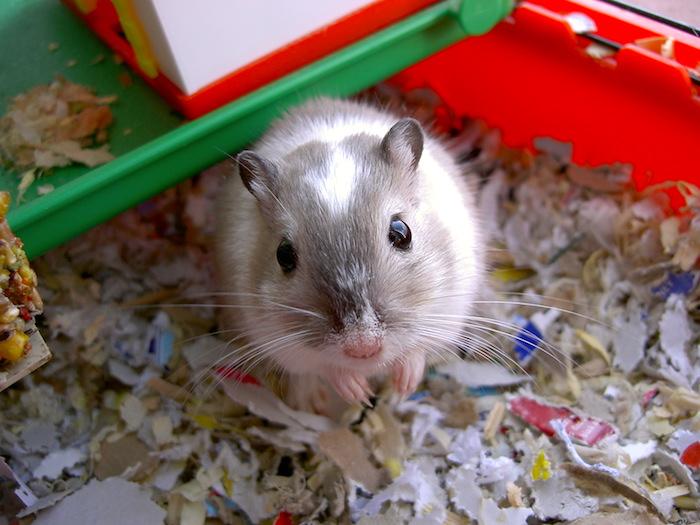 Hamster preguntas y respuestas