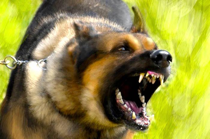 Rabia en perros sintomas causas y tratamiento