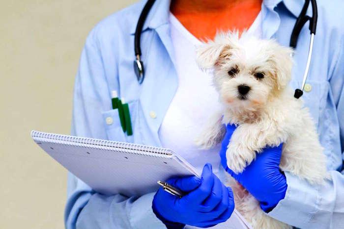 La importancia de los tratamientos regulares para su perro