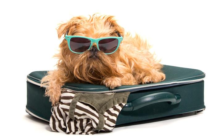 Te vas al extranjero con tu perro Preparalos para viajar
