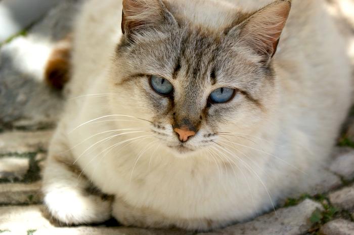 Gatos gordos preguntas y respuestas para lograr que su gato vuelva a estar en forma