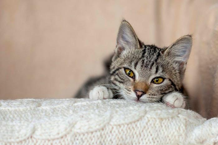 Remedio homeopatico para la gripe felina
