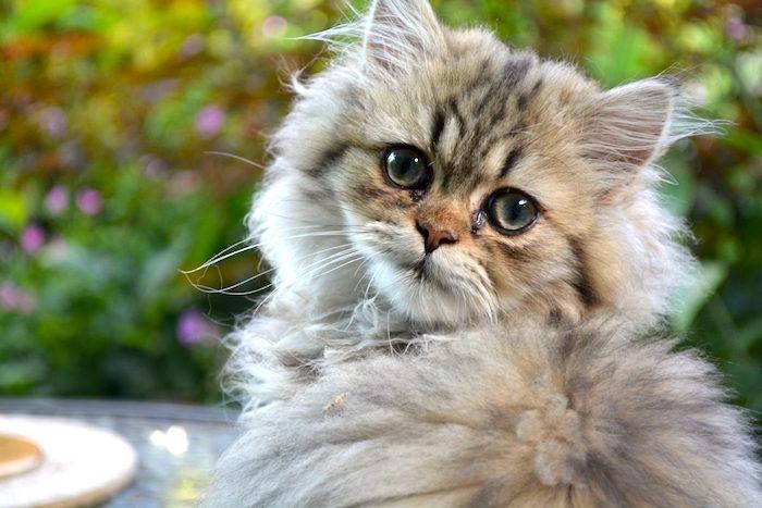 Sintomas de gusanos en gatos