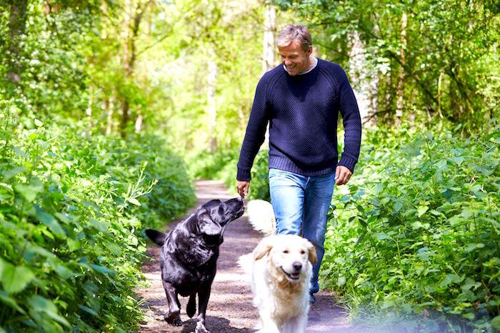 Consejos de salud para perros