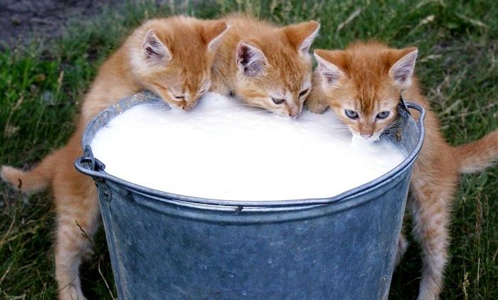 Gatos y productos lacteos