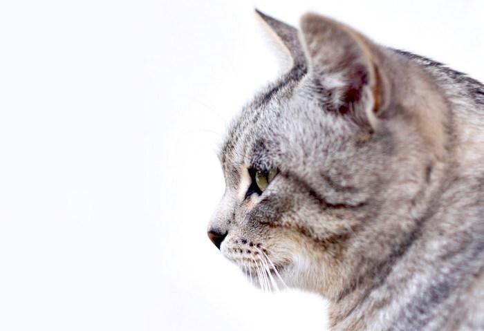 Enfermedad felina del tracto urinario inferior