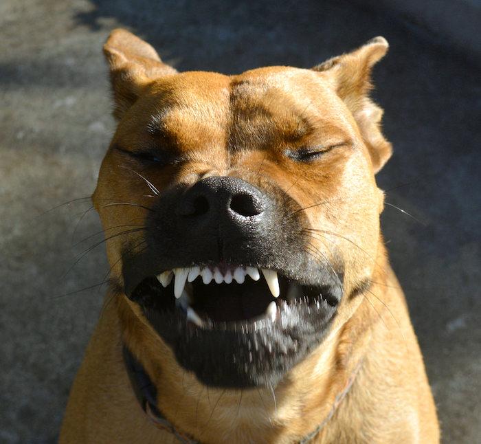 Mi perro esta estornudando