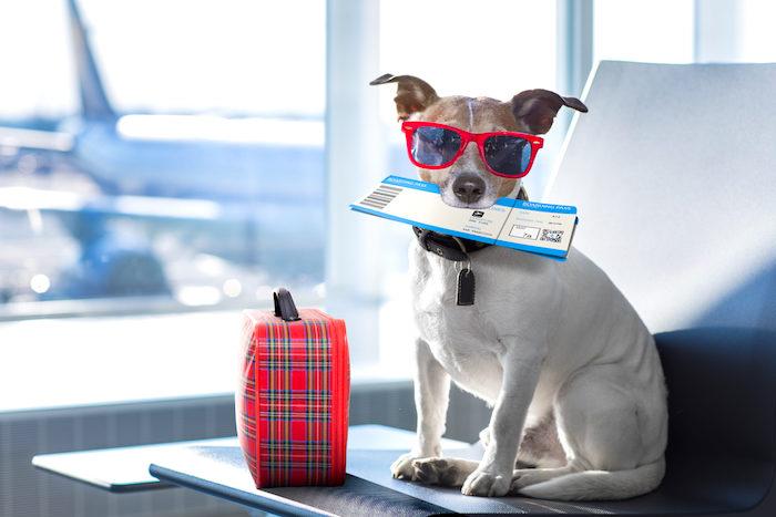 10 consejos para un viaje seguro en avion con tu mascota