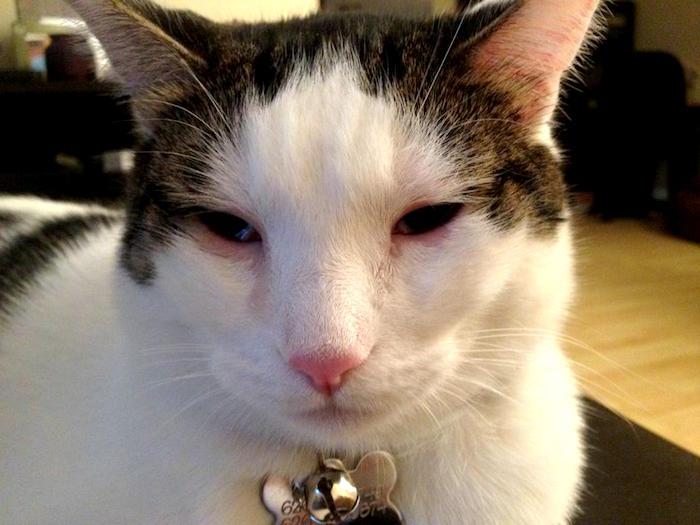 Conjuntivitis en gatos tipos sintomas causas y tratamientos