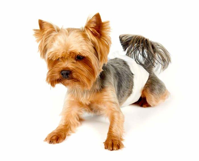 Sintomas urinarios en perros