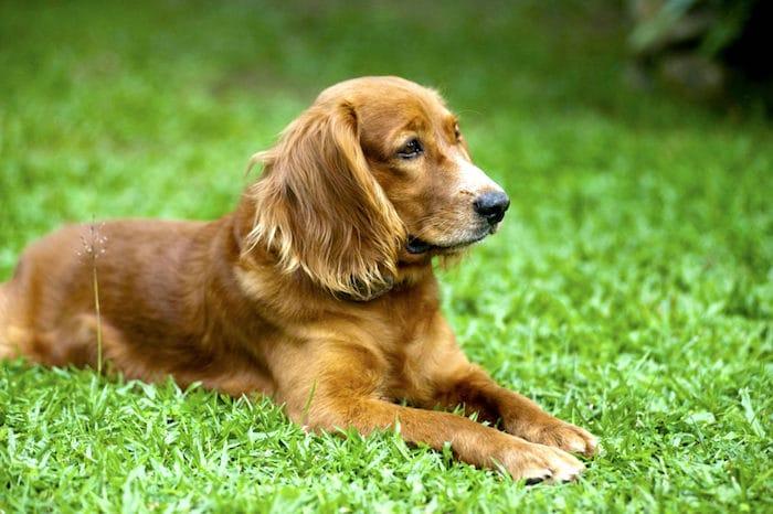 Tumores del tracto reproductivo en perros