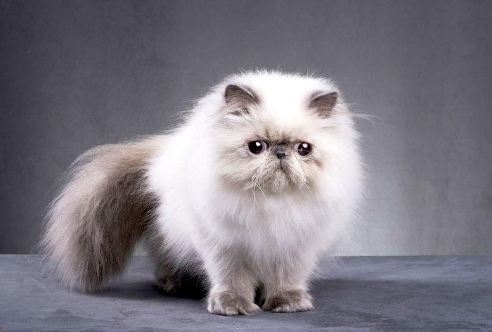 ¿Qué hace que un abrigo de gato se sienta grasoso?