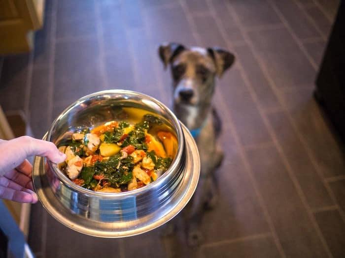 ¿Deberías hacer tu propia comida para perros?