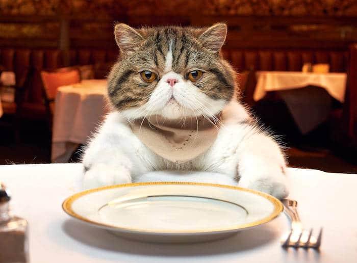 Deficiencia de vitamina B1 (tiamina) en gatos