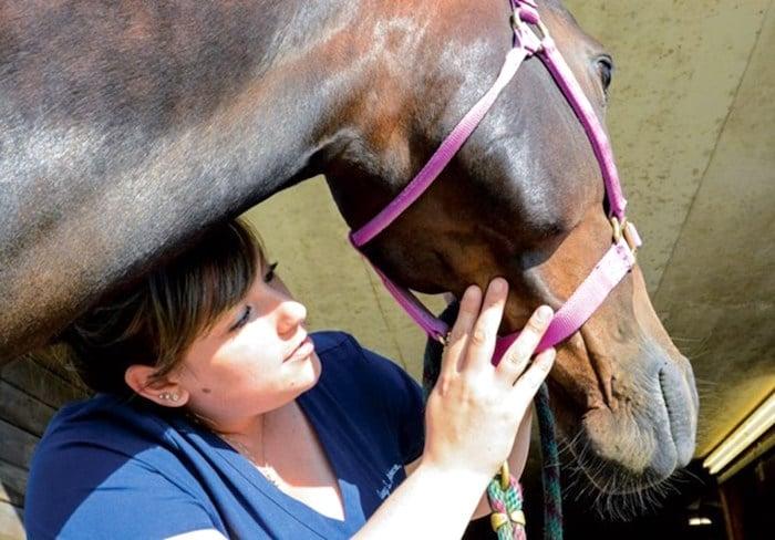 Infección de la piel (ebullición) en caballos