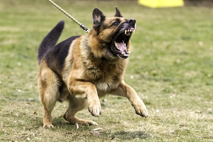 Comportamientos ingobernables en perros