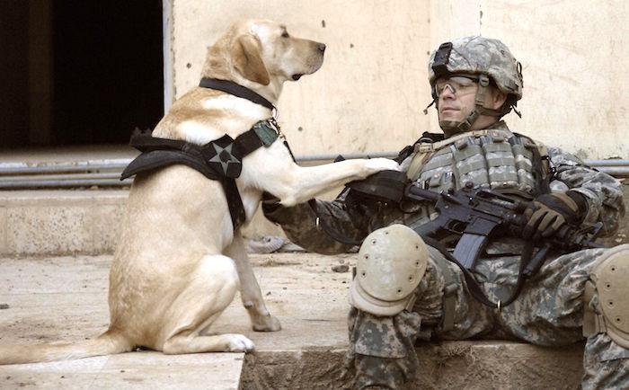 11 cosas que debe saber sobre los perros de servicio