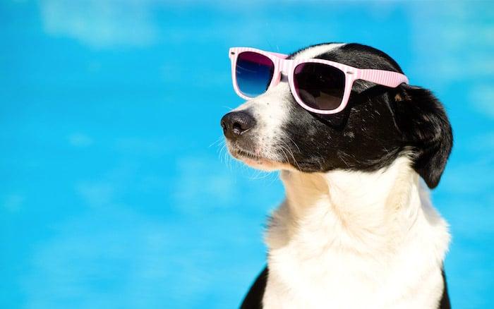Perros que se van de vacaciones sin el dueño