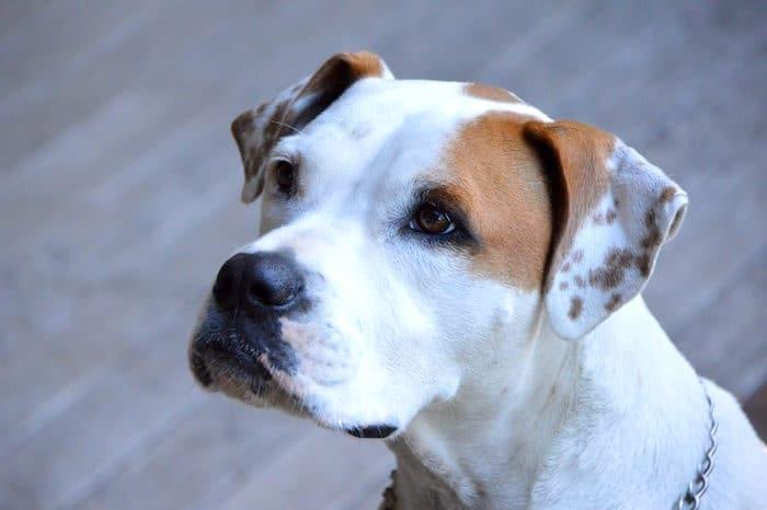 Qué hacer cuando su perro es diagnosticado con cáncer: tratamiento, pronóstico y costos