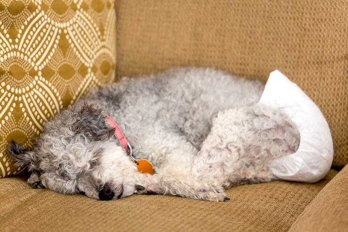 Pancreatitis en perros sintomas y tratamientos