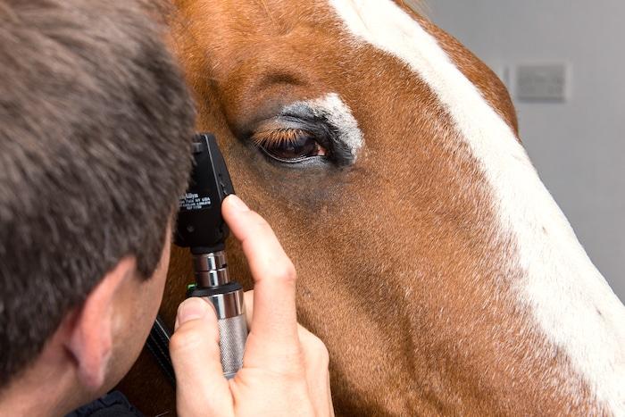 Ojo rosado en caballos