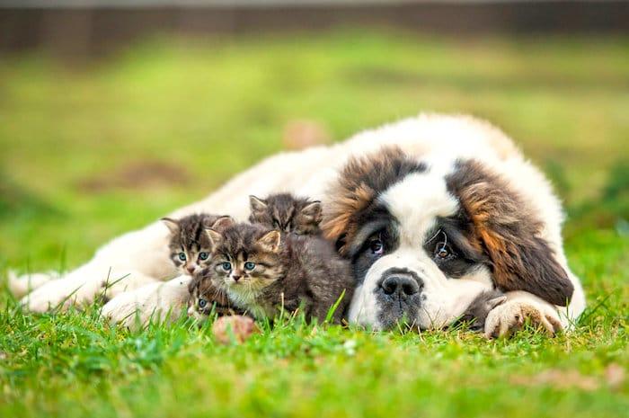 El complejo código emocional y moral en perros