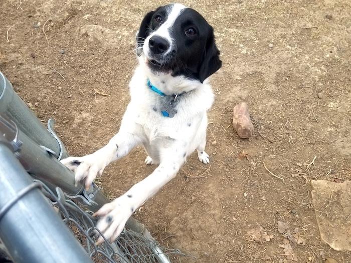 Consejos importantes sobre la adopción de perros