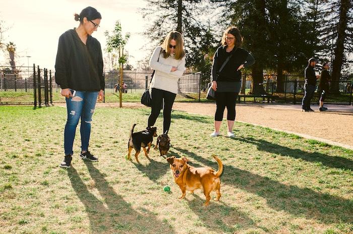 7 cosas que puede estar haciendo mal en el parque para perros