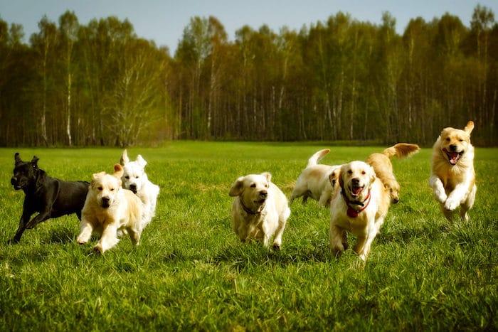 Cinco mitos caninos reventados