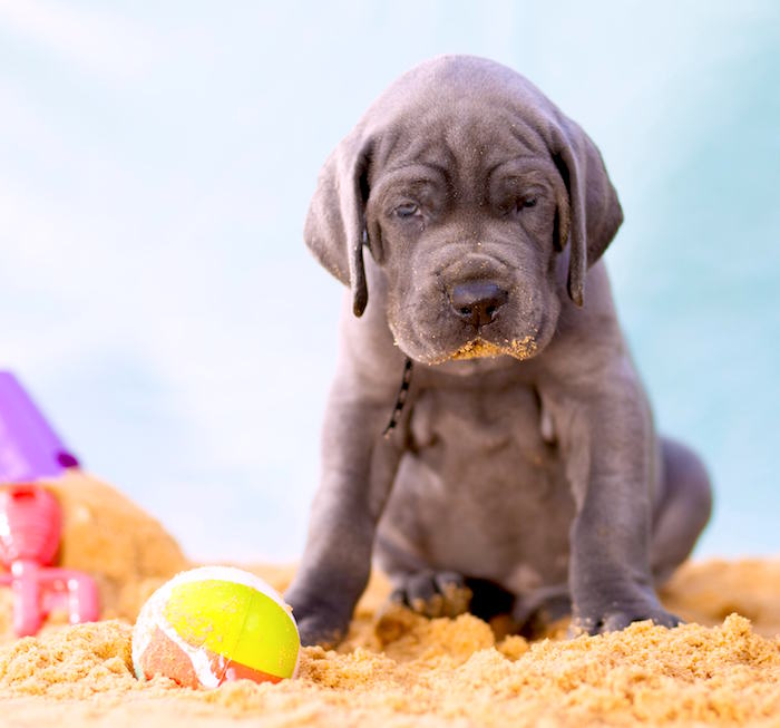 ¿Por qué los perros a veces comen tierra?