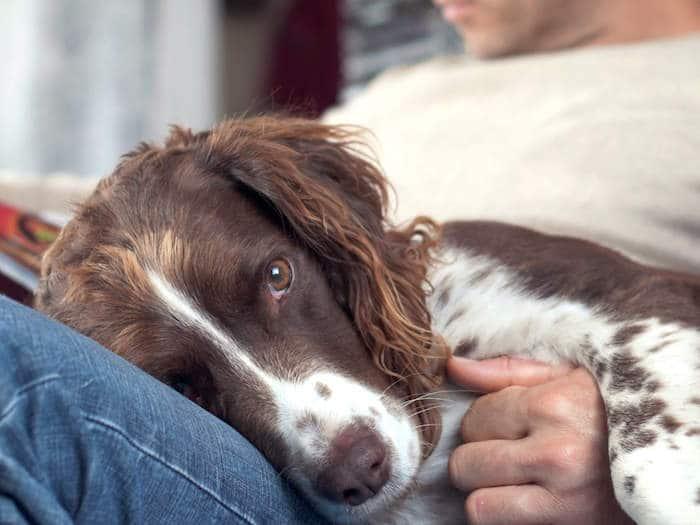 ¿Puede tu perro arruinar tu vida amorosa?