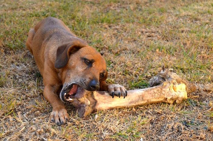 5 formas de ahorrar dinero en comida para mascotas