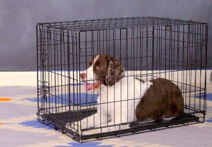 Los beneficios de la caja de entrenamiento de su perro