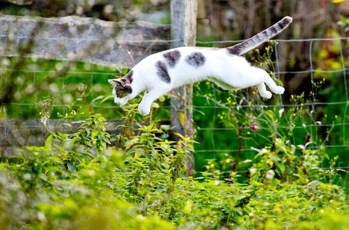 Cómo hacer que tu jardín no sea atractivo para otros gatos