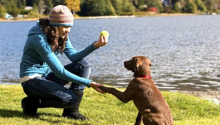 5 consejos para un perro perfectamente entrenado