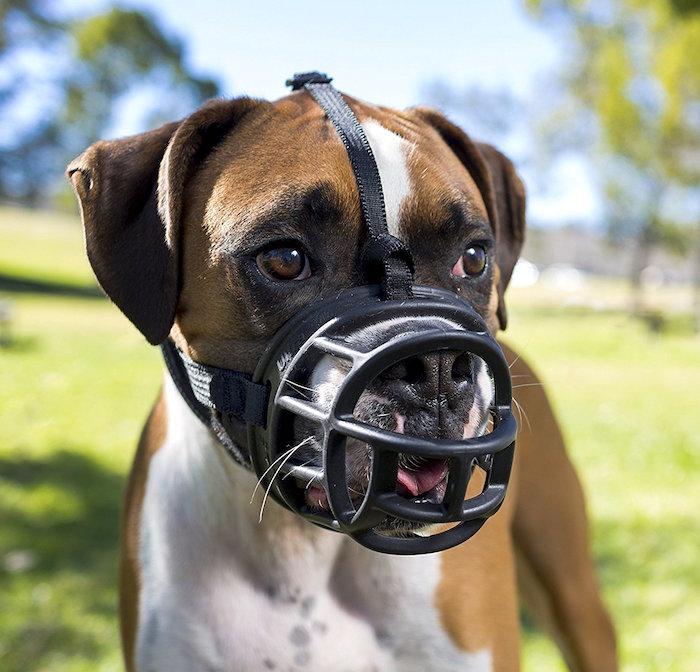 Cómo enseñar a su perro a usar un bozal