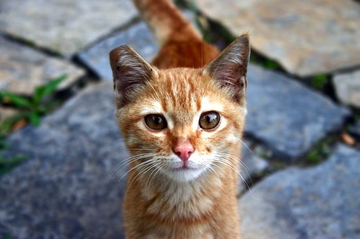 Cómo enseñar a su gato a venir cuando se le llama
