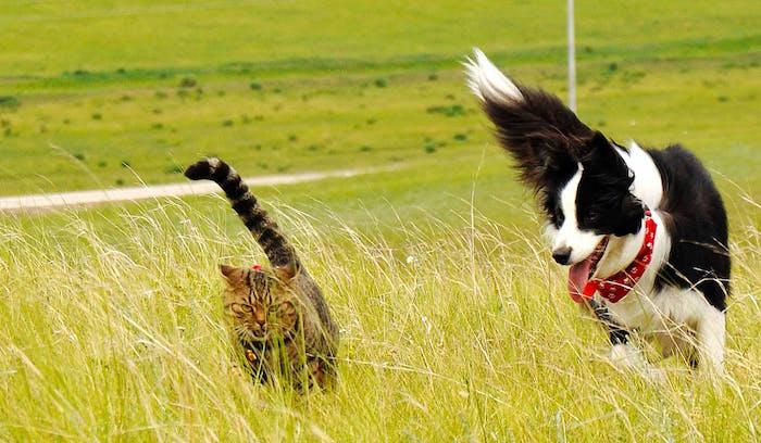 Cómo evitar que tu perro persiga a los gatos