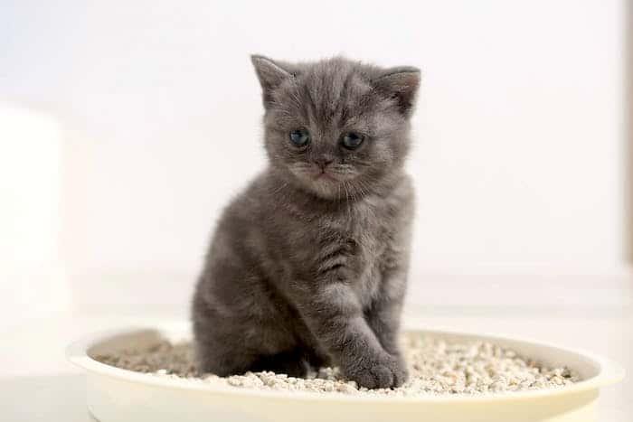 Marcado de orina en gatos