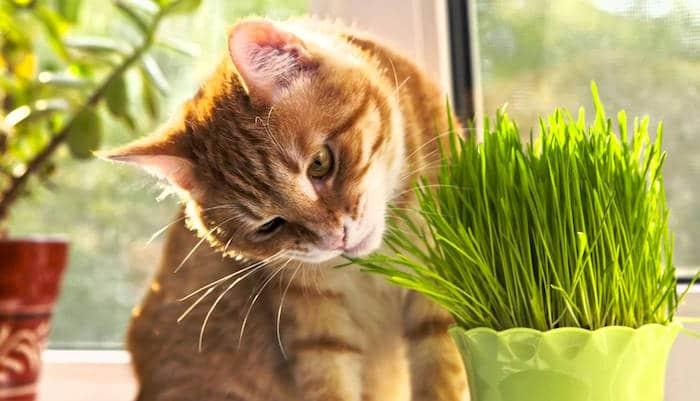 Cómo detener a su gato de comer plantas