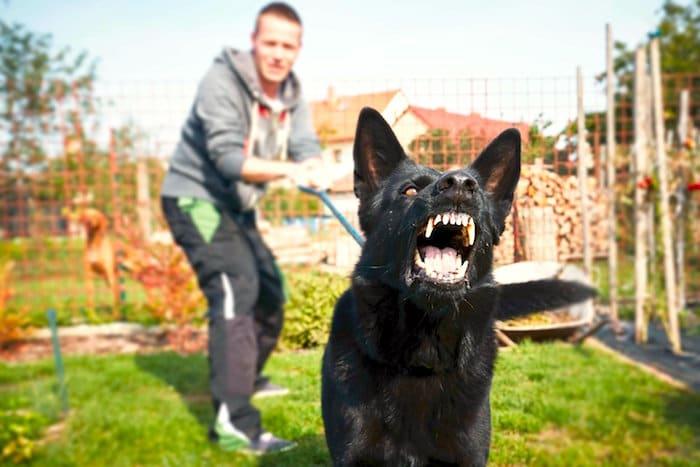 ¿Es su perro reactivo con correa?