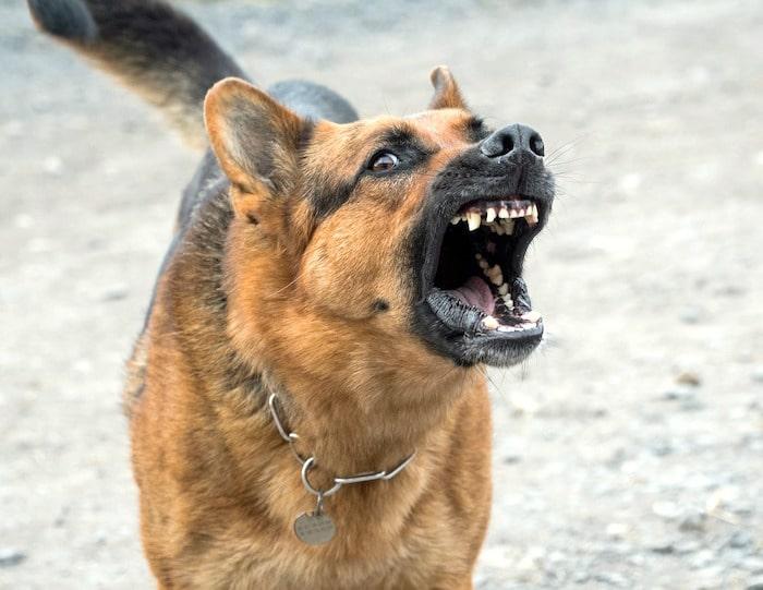 Agresión del perro