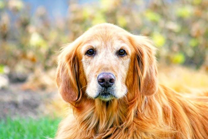 Hunde schnüffeln Krampfanfälle