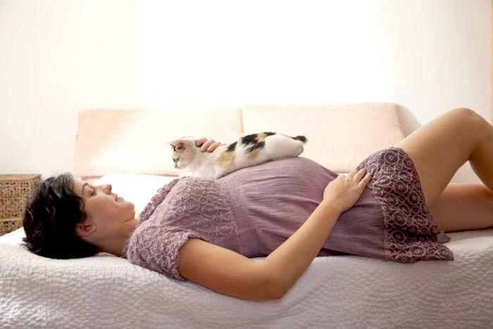 Cómo preparar a tu gato para la llegada de tu nuevo bebé