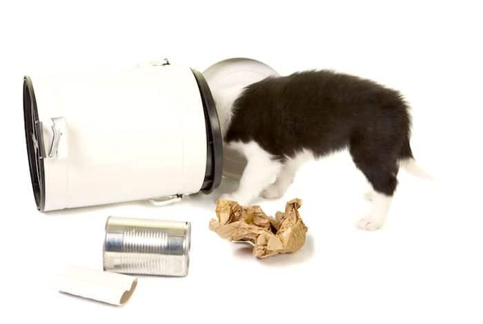 ¿Su perro ataca la basura?