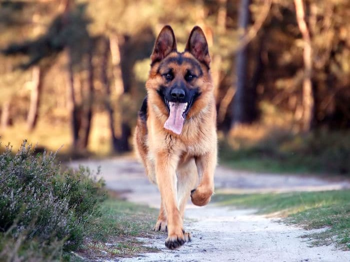 Qué hacer si tu perro persigue a los niños